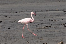 flamingo_1200_210
