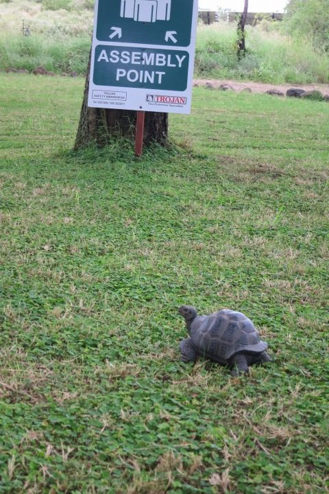 tortoise run