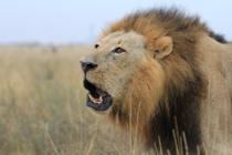 ナイロビ国立公園まとめ(転載)